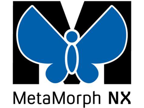 Metamorphosis essay thesis